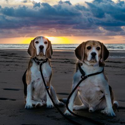 Team Beagle